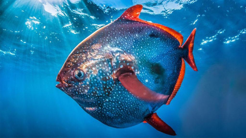 χρωματιστό ψάρι