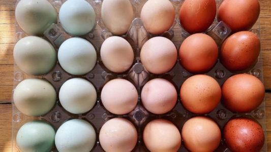 Δεν θα πιστεύεις τι χρώμα έχει ο κρόκος αυτών των αυγών!