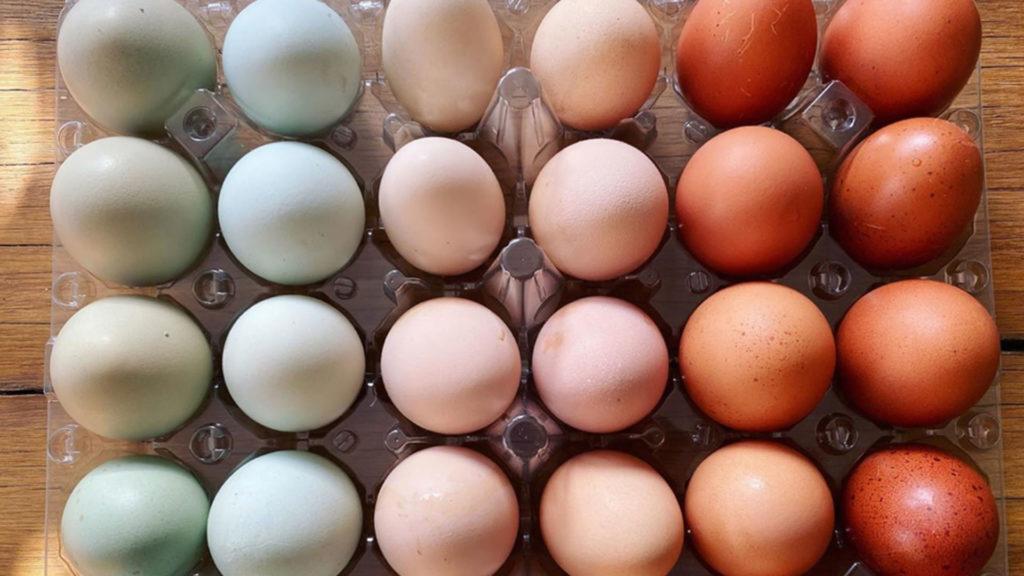 αυγά με χρώμα