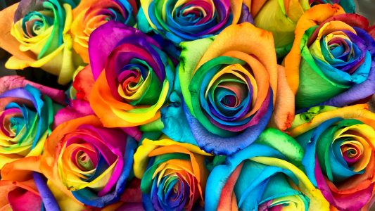 Rainbow Roses! Δεν είναι photoshop!